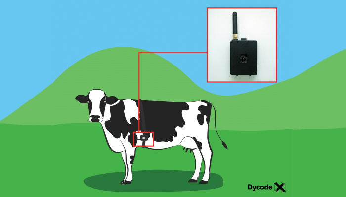 IoT Solutions For Livestock Farming