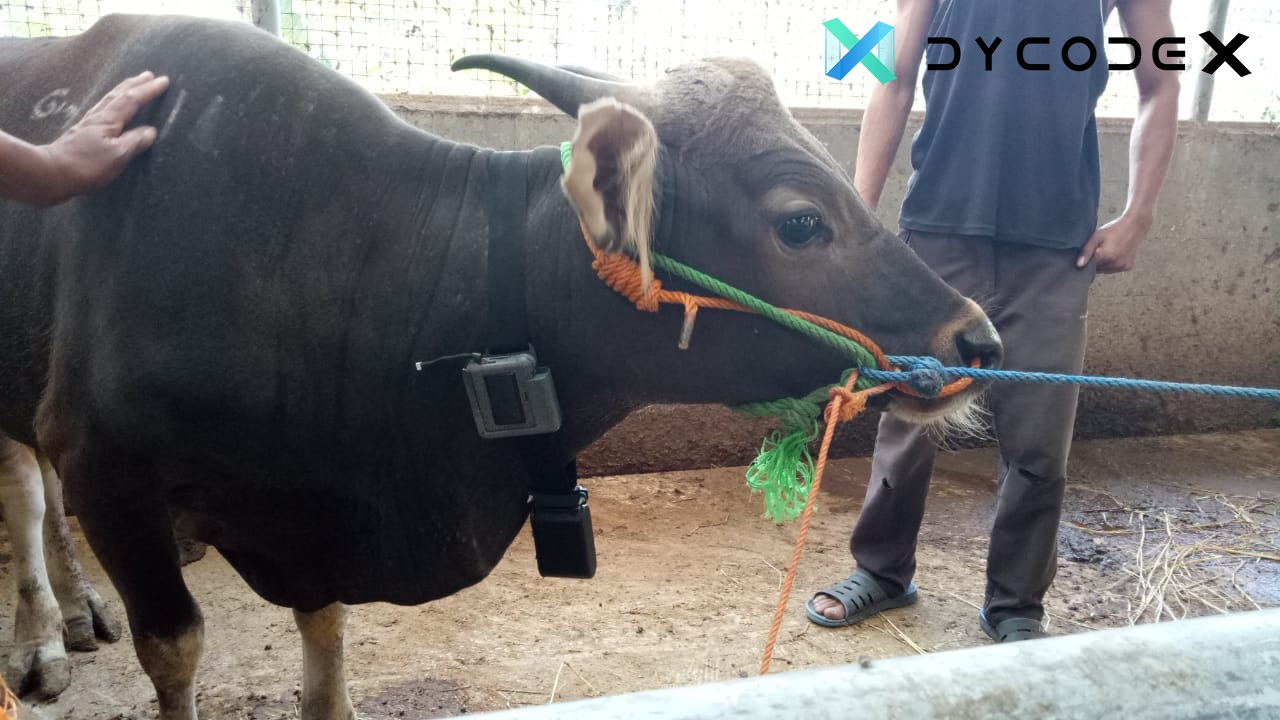 SMARTernak Conducts Fourth Field Trial to Improve AI by Collecting Cattle Behavioral Pattern
